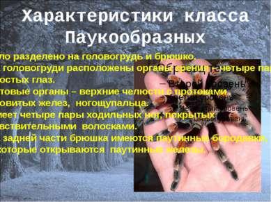Характеристики класса Паукообразных Тело разделено на головогрудь и брюшко. Н...