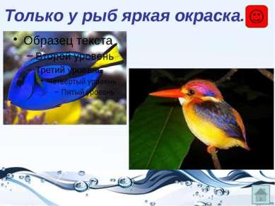 Есть у рыб плавательный пузырь, ни у кого другого его нет! – который помогает...