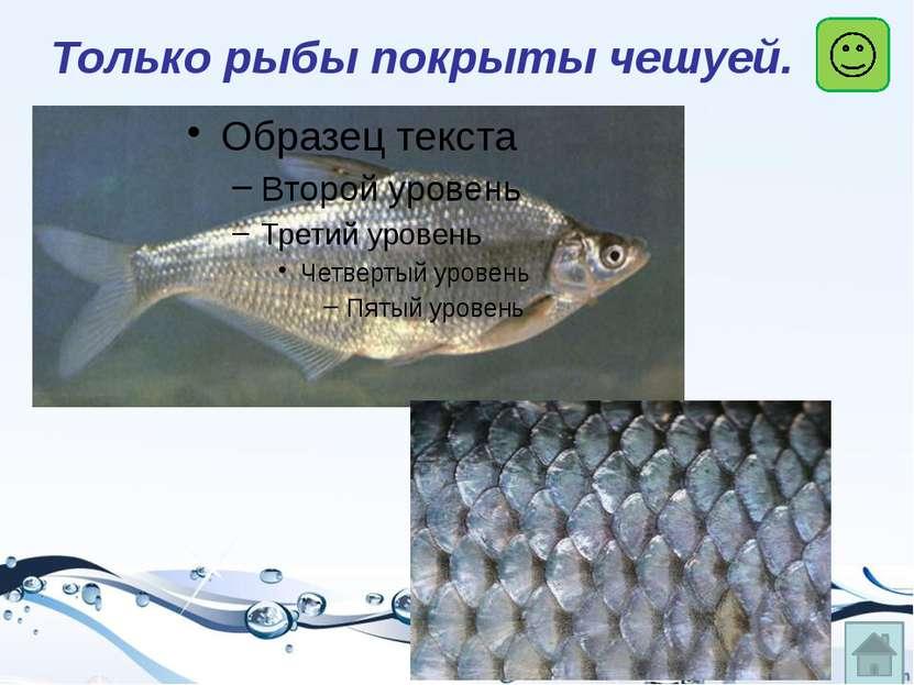 окунь щука карась ёрш Речные рыбы
