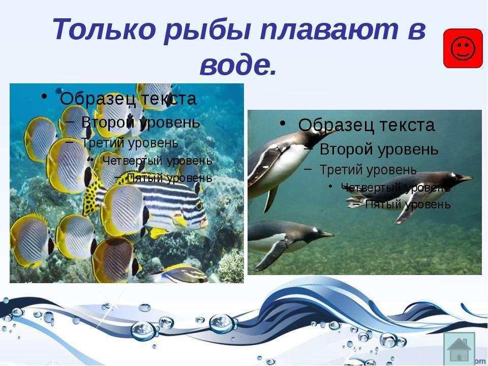 Уменя, вотличие отбольшинства других рыб, тело голое, без чешуи. А защищае...