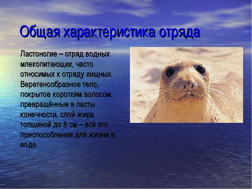 Общая характеристика отряда Ластоногие – отряд водных млекопитающих, часто от...