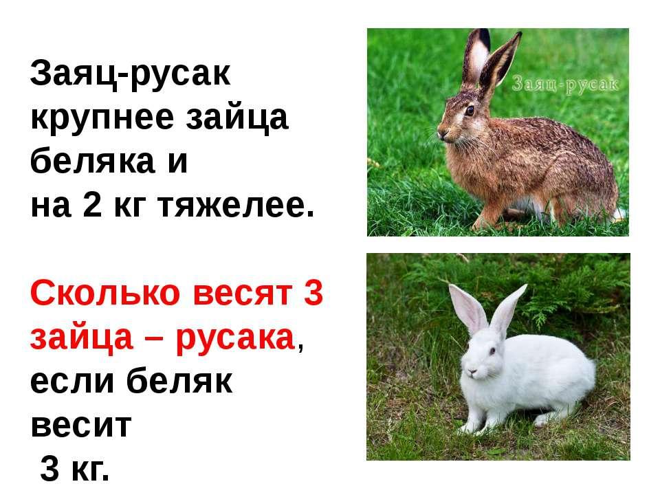Заяц-русак крупнее зайца беляка и на 2 кг тяжелее. Сколько весят 3 зайца – ру...