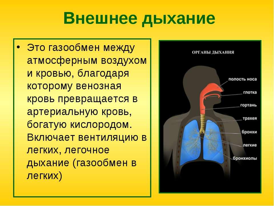 Внешнее дыхание Это газообмен между атмосферным воздухом и кровью, благодаря ...