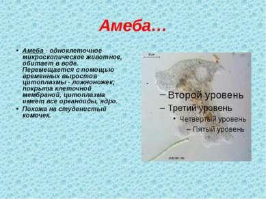 Амеба… Амеба - одноклеточное микроскопическое животное, обитает в воде. Перем...
