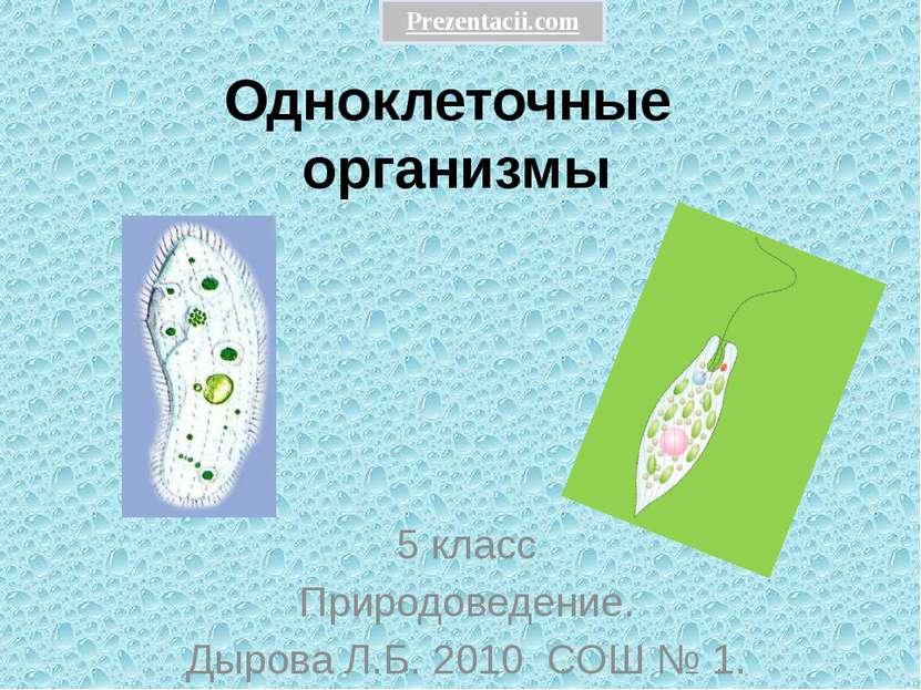 Одноклеточные организмы 5 класс Природоведение. Дырова Л.Б. 2010 СОШ № 1. Pre...