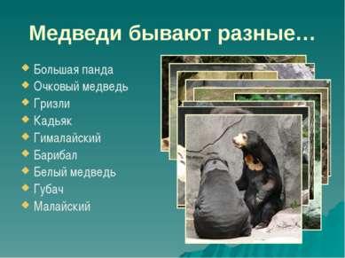 Медведи бывают разные… Большая панда Очковый медведь Гризли Кадьяк Гималайски...