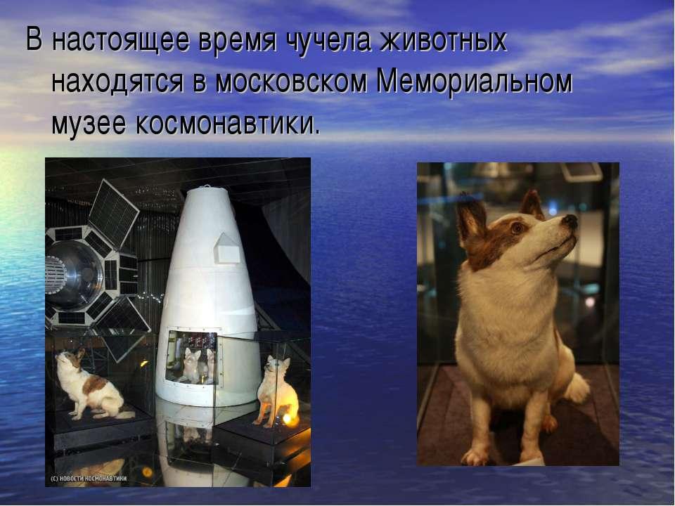 В настоящее время чучела животных находятся в московском Мемориальном музее к...