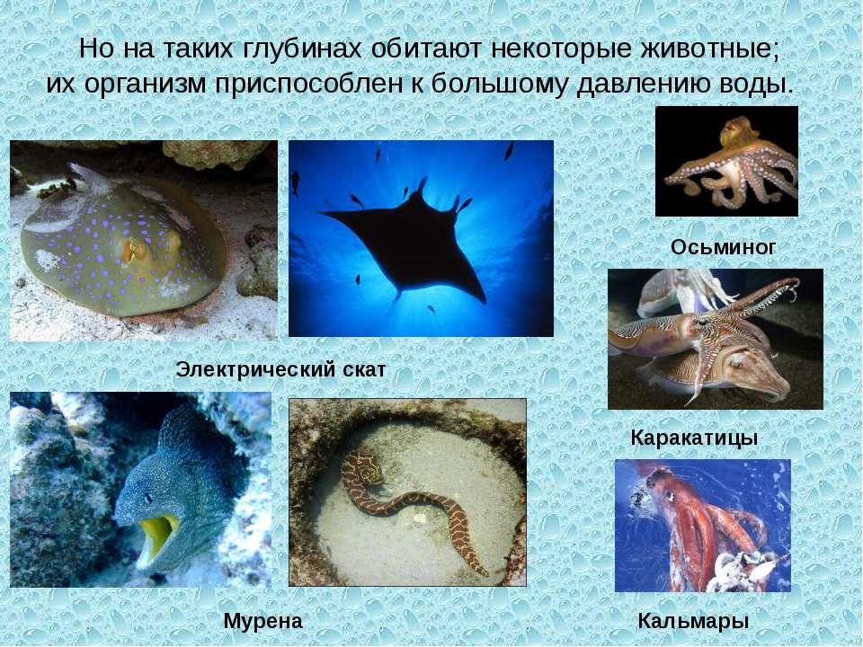 Но на таких глубинах обитают некоторые животные; их организм приспособлен к б...