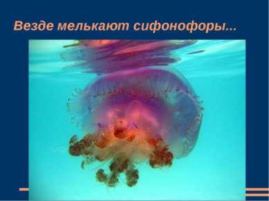 Везде мелькают сифонофоры...