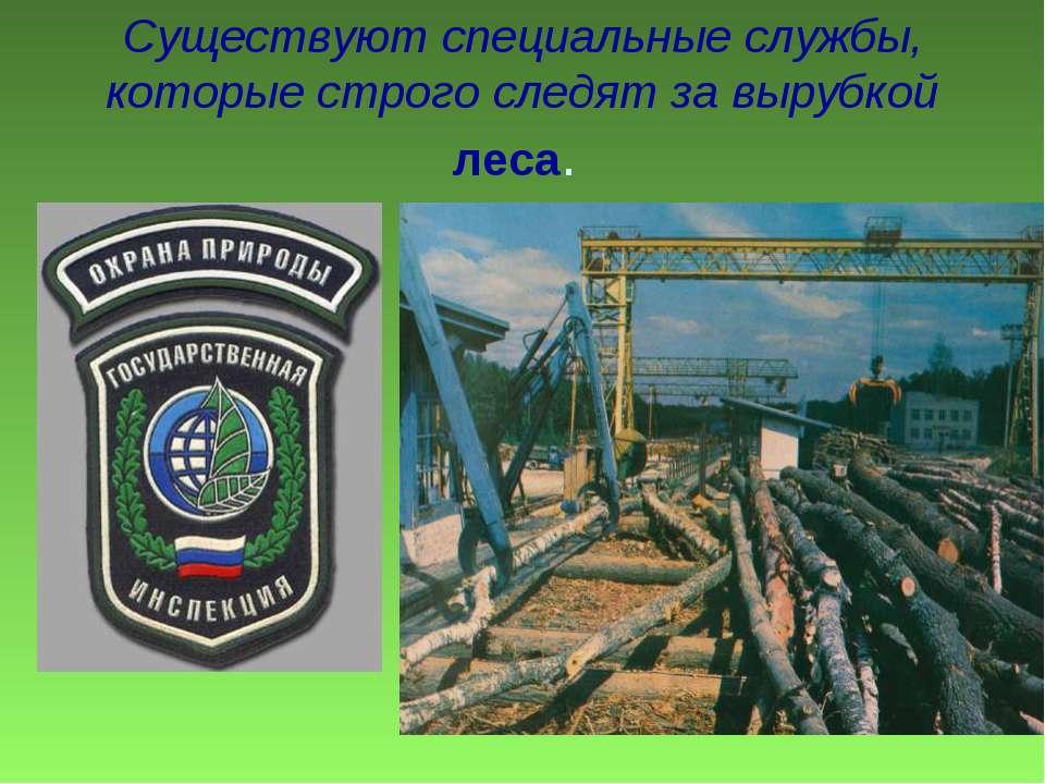 Существуют специальные службы, которые строго следят за вырубкой леса.