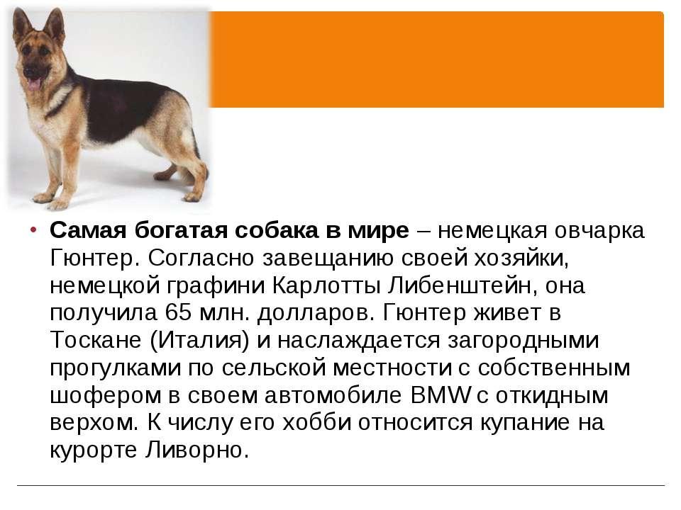 Самая богатая собака в мире – немецкая овчарка Гюнтер. Согласно завещанию сво...