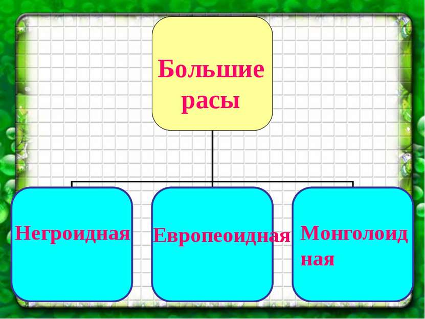 Большие расы Негроидная Европеоидная Монголоидная