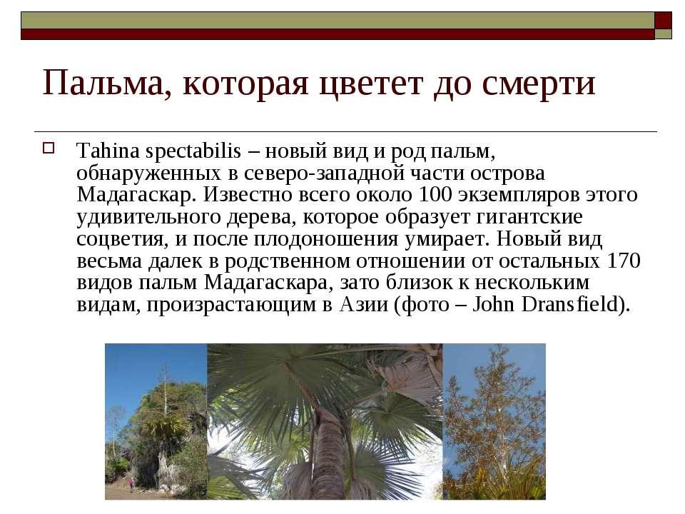 Пальма, которая цветет до смерти Tahina spectabilis – новый вид и род пальм, ...