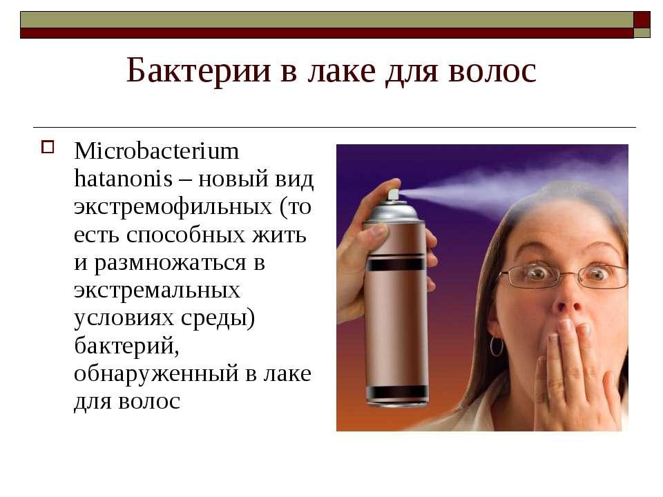 Бактерии в лаке для волос Microbacterium hatanonis – новый вид экстремофильны...