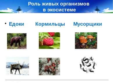 Роль живых организмов в экосистеме Едоки Кормильцы Мусорщики