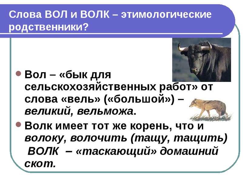 Слова ВОЛ и ВОЛК – этимологические родственники? Вол – «бык для сельскохозяйс...