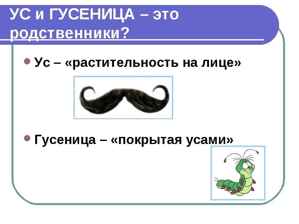 УС и ГУСЕНИЦА – это родственники? Ус – «растительность на лице» Гусеница – «п...