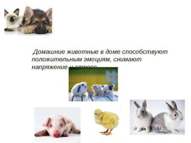 Домашние животные в доме способствуют положительным эмоциям, снимают напряжен...