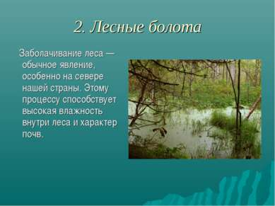 2. Лесные болота Заболачивание леса — обычное явление, особенно на севере наш...