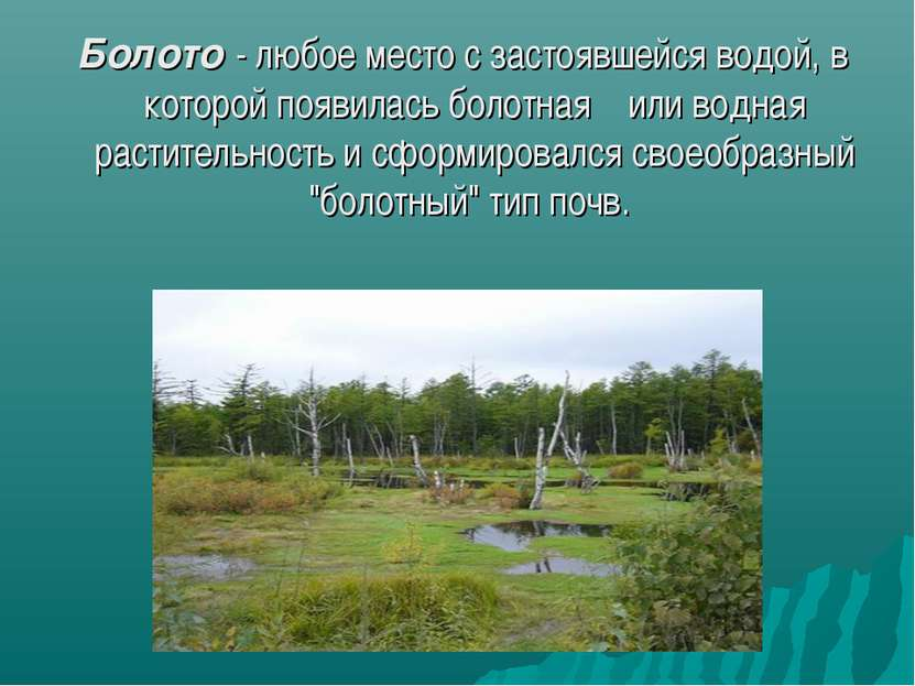 Болото - любое место с застоявшейся водой, в которой появилась болотная или в...