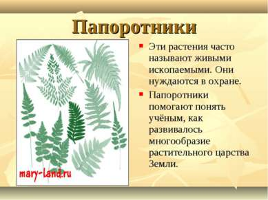 Папоротники Эти растения часто называют живыми ископаемыми. Они нуждаются в о...