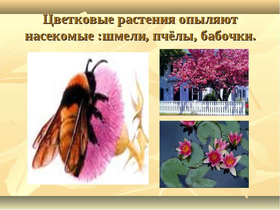 Цветковые растения опыляют насекомые :шмели, пчёлы, бабочки.