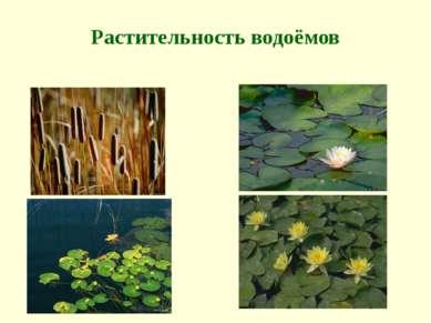 Растительность водоёмов
