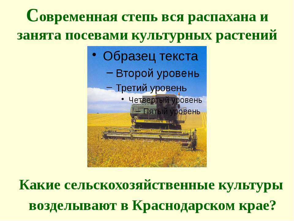 Современная степь вся распахана и занята посевами культурных растений Какие с...