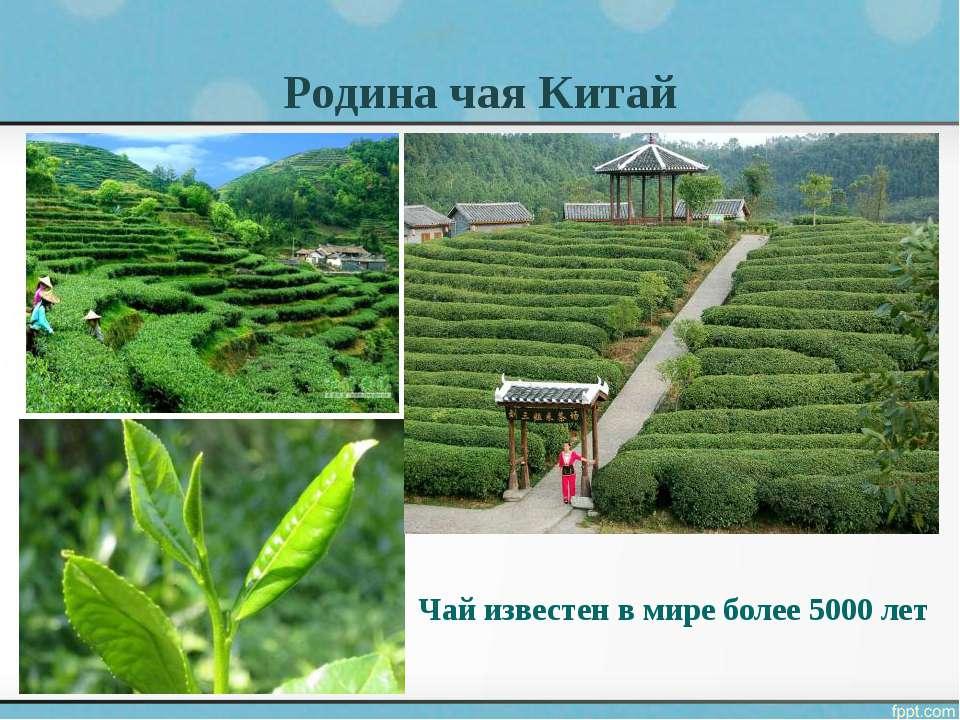 Родина чая Китай Чай известен в мире более 5000 лет