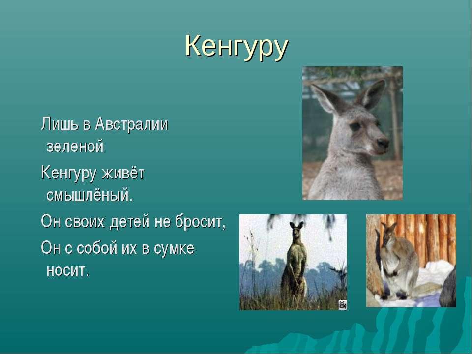 Кенгуру Лишь в Австралии зеленой Кенгуру живёт смышлёный. Он своих детей не б...