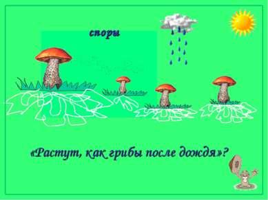 споры «Растут, как грибы после дождя»?