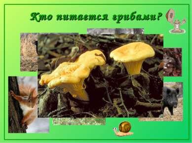 Кто питается грибами?