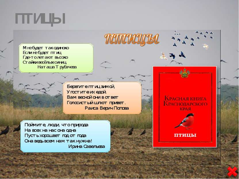 Воспитатель детского сада, МБДОУ «ДС № 8 «Теремок» ст. Канеловская Староминск...