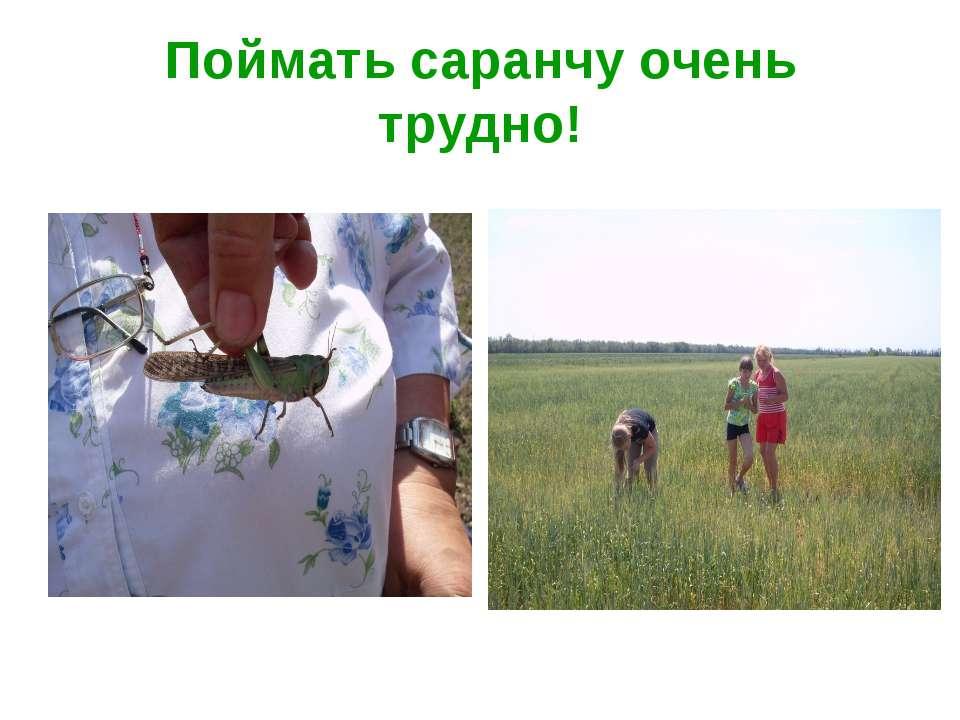 Поймать саранчу очень трудно!