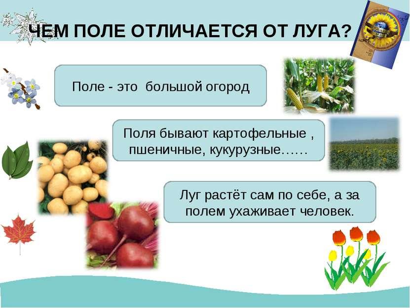 ЧЕМ ПОЛЕ ОТЛИЧАЕТСЯ ОТ ЛУГА? Поле - это большой огород Поля бывают картофельн...