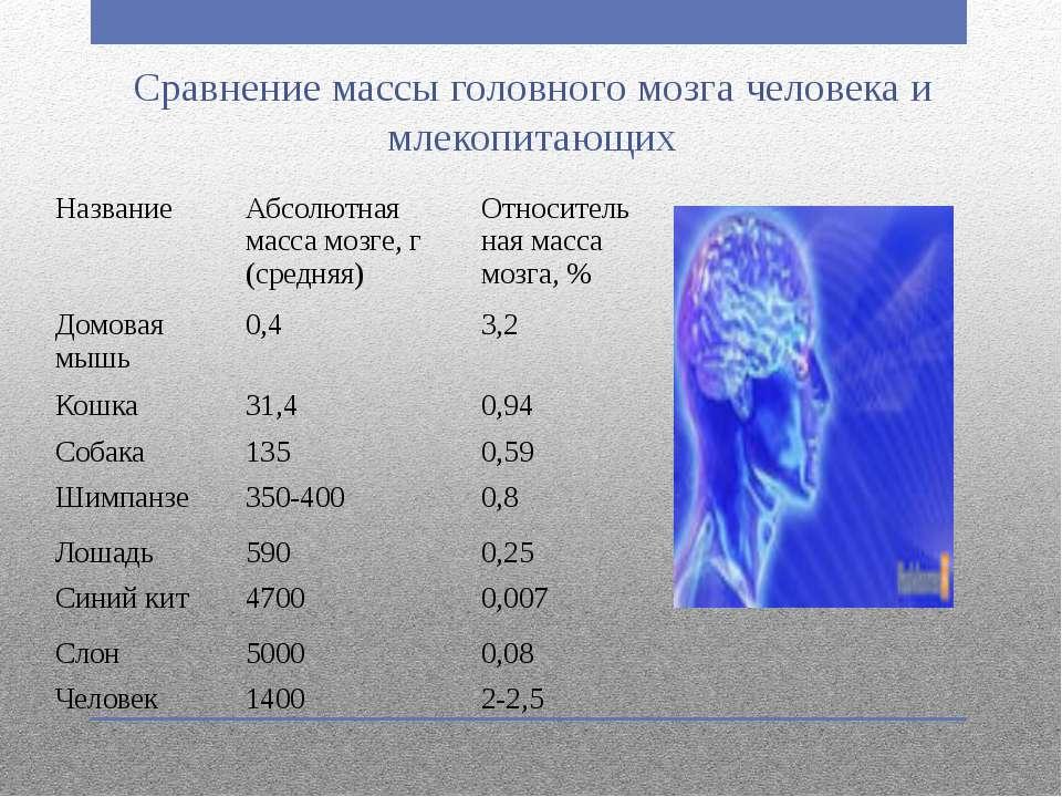 Сравнение массы головного мозга человека и млекопитающих Название Абсолютная ...