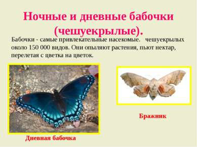 Ночные и дневные бабочки (чешуекрылые). Бабочки - самые привлекательные насек...