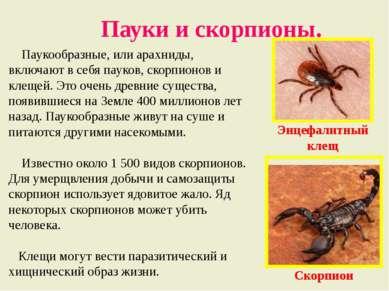 Пауки и скорпионы. Паукообразные, или арахниды, включают в себя пауков, скорп...