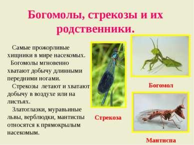 Богомолы, стрекозы и их родственники. Самые прожорливые хищники в мире насеко...