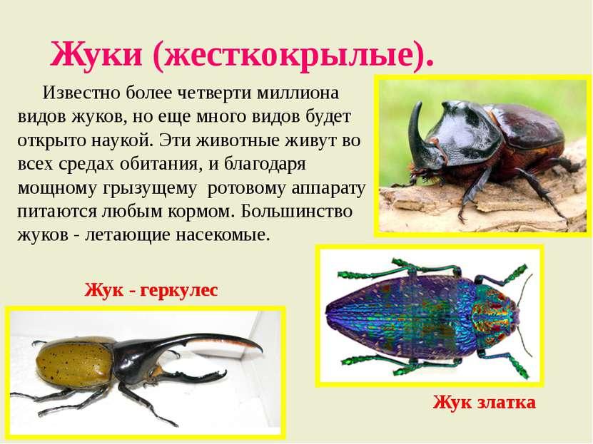 Жуки (жесткокрылые). Известно более четверти миллиона видов жуков, но еще мно...