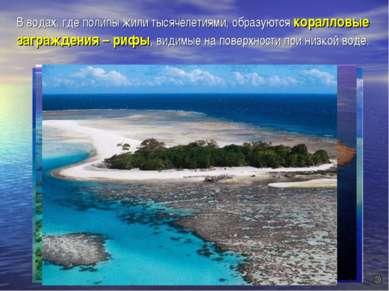 В водах, где полипы жили тысячелетиями, образуются коралловые заграждения – р...