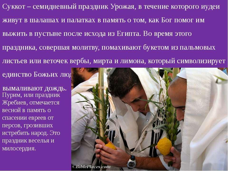 Суккот – семидневный праздник Урожая, в течение которого иудеи живут в шалаша...