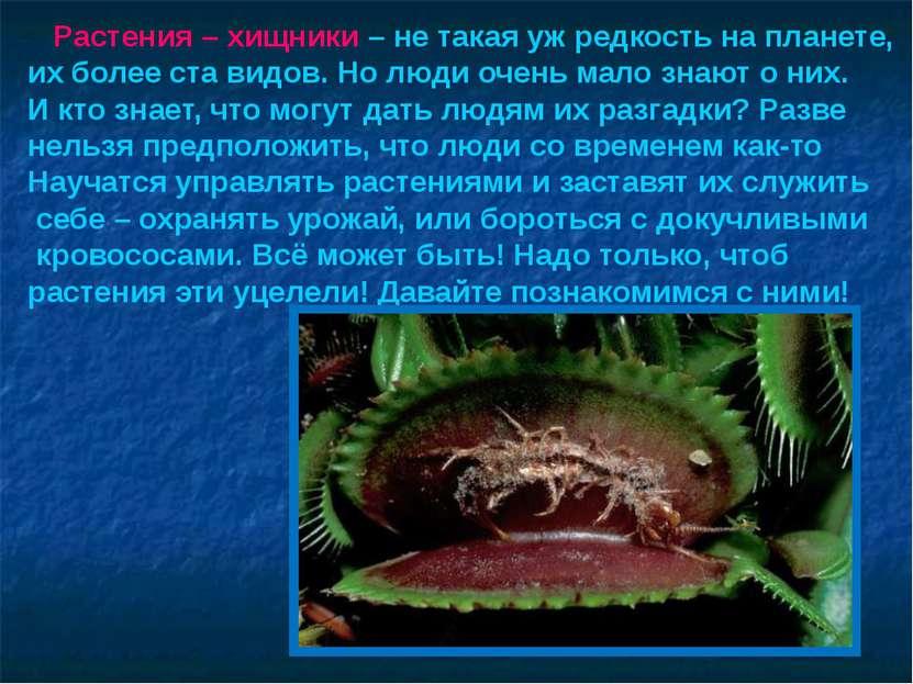 Растения – хищники – не такая уж редкость на планете, их более ста видов. Но ...