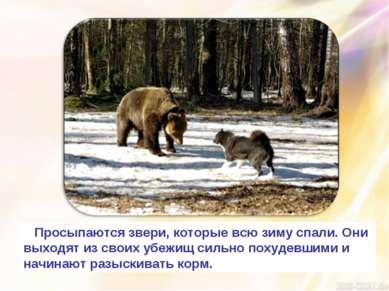 Просыпаются звери, которые всю зиму спали. Они выходят из своих убежищ сильно...