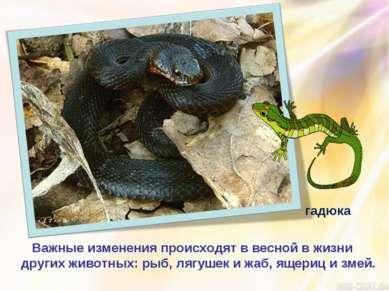 Важные изменения происходят в весной в жизни других животных: рыб, лягушек и ...