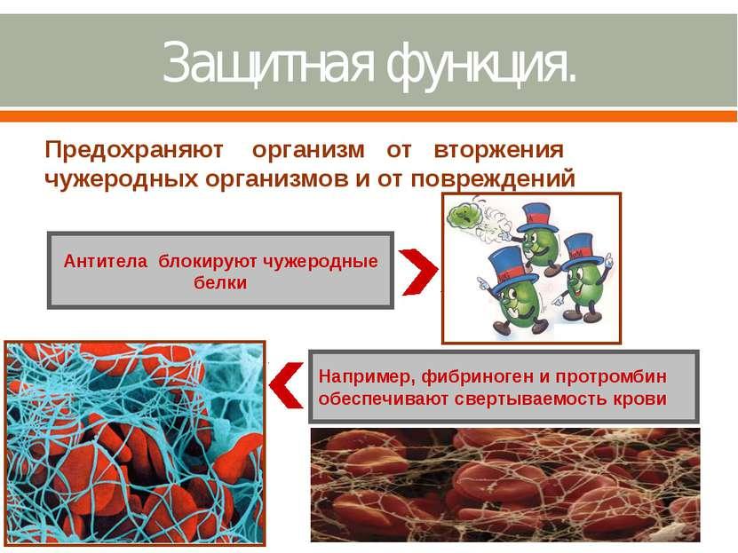 Защитная функция. Предохраняют организм от вторжения чужеродных организмов и ...