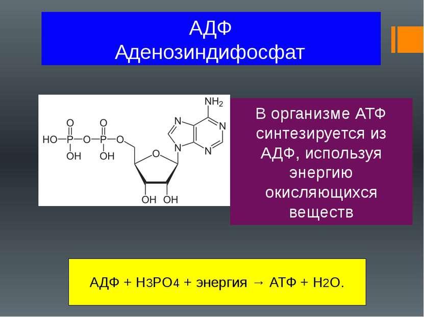 АДФ Аденозиндифосфат В организме АТФ синтезируется из АДФ, используя энергию ...
