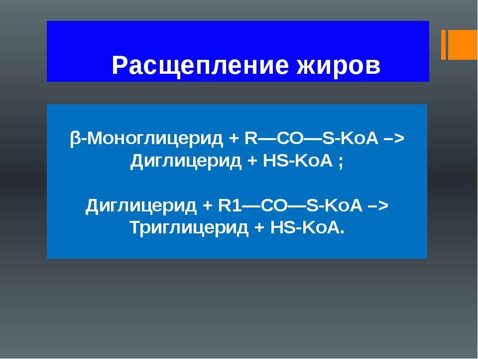Расщепление жиров β-Моноглицерид + R—СО—S-KoA –> Диглицерид + HS-KoA ; Диглиц...