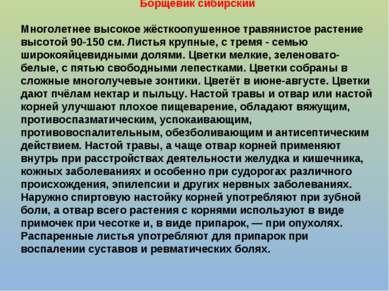 Борщевик сибирский Многолетнее высокое жёсткоопушенное травянистое растение в...