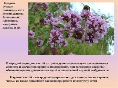 В народной медицине настой из травы душицы используют для повышения аппетита ...